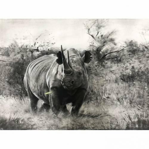 Black rhinos require a safe haven