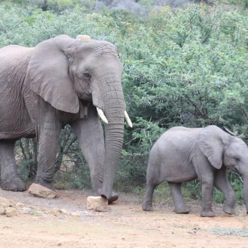 Elephant rescue by one of Loziba's founding members